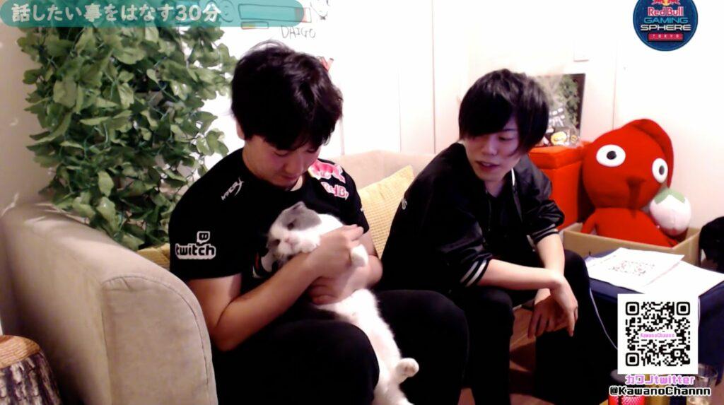Street Fighter, Umehara Daigo, UmeCat, pet cat